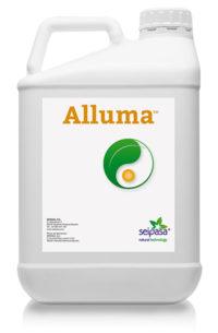 Alluma Jug 2019